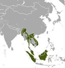 Small-toothed Palm Cive area.png