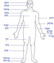 Human body features heb.jpg